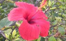 fleur, Sophie Wery